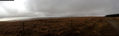 Upland moor and conifer plantation, Mynydd William Meyrick